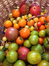 Today's tomatoes
