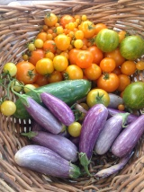 Summer eggplant and tomato harvest #1